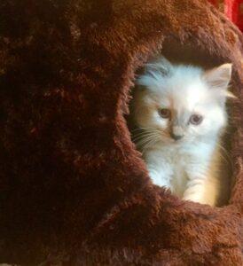 Bijou Cat
